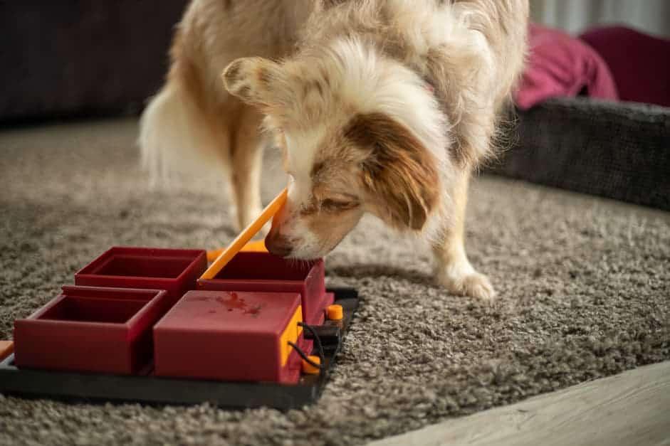 Hund öffnet Schublade