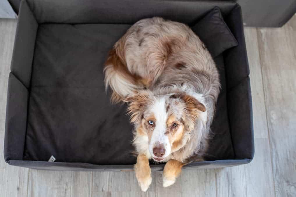 Mira liegt im Hundebett