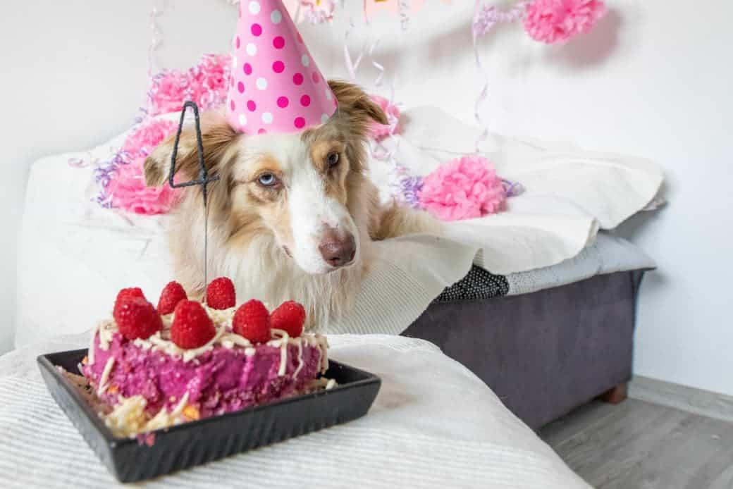 Hundetorte zum Hundegeburtstag