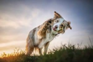 Hundetricks