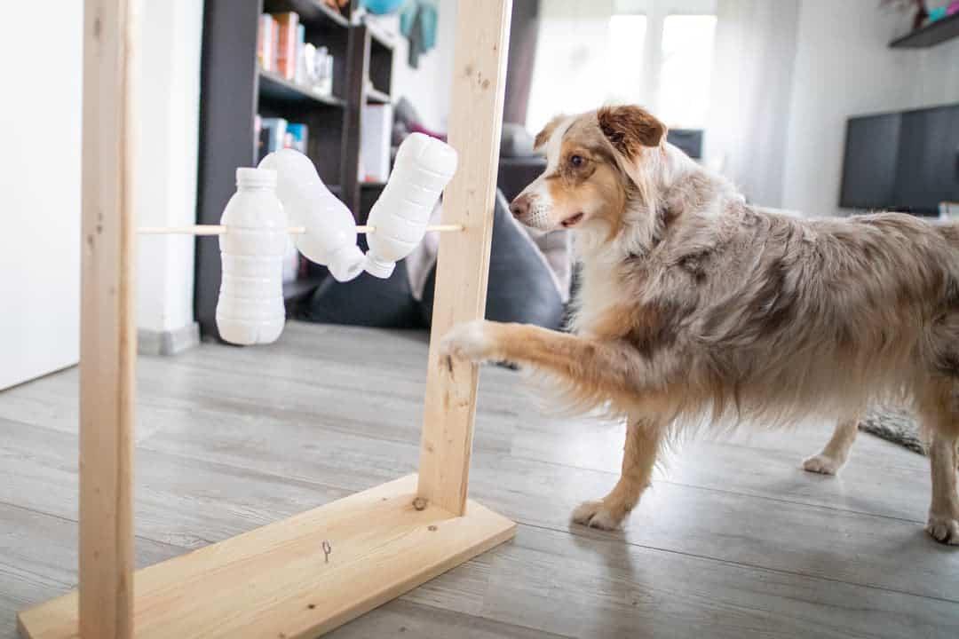 selbstgebautes Intelligenzspielzeug für Hunde