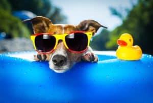 Hund im Pool zur Abkühlung