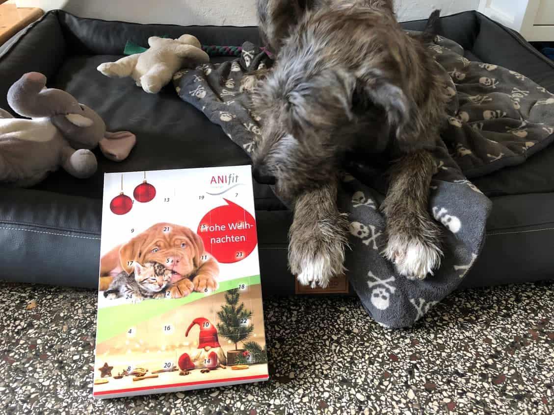 Dexter freut sich auf den Adventskalender