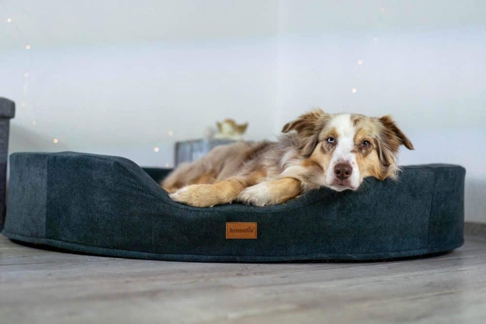 Mira im Hundebett