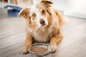 Flohsamenschalen für Hunde