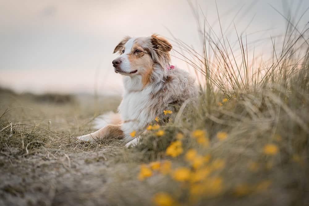 Hundefotografie am Stand