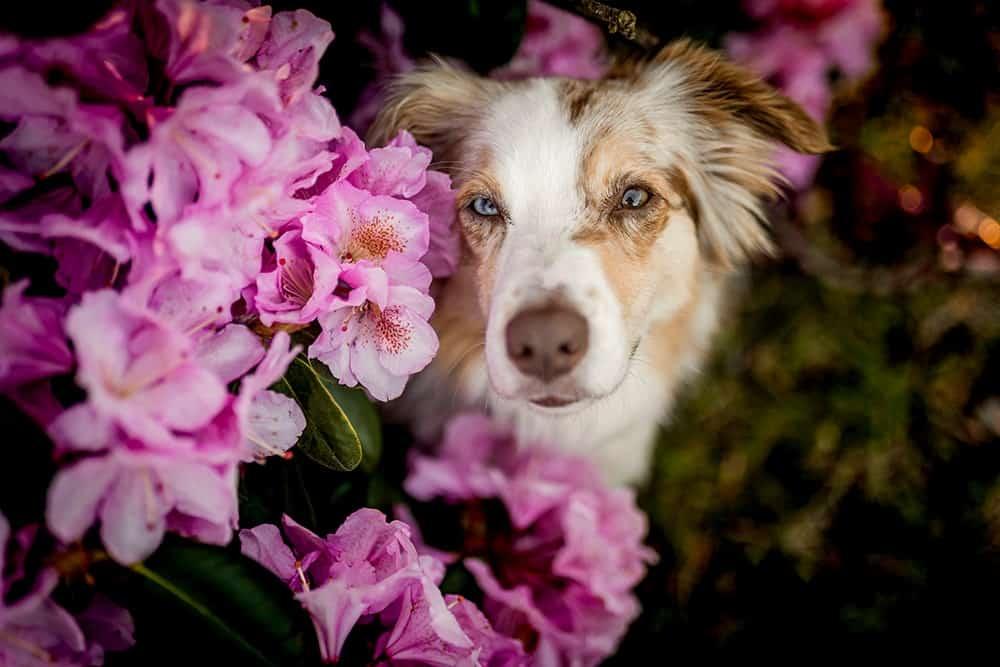 Vergiftung beim Hund durch Pflanzen