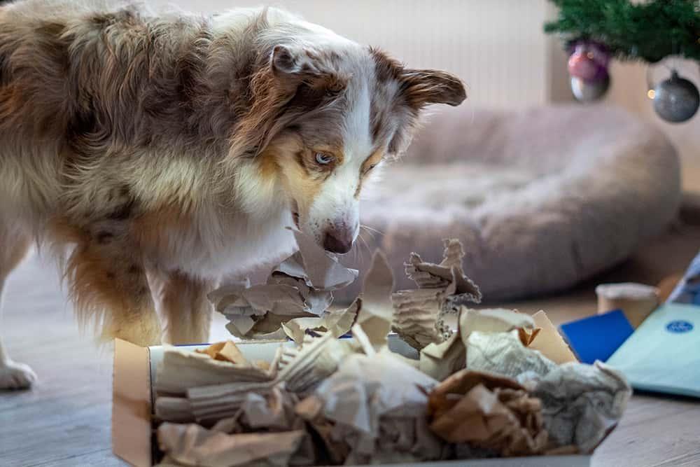 Nasenspiele für Hunde