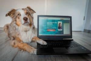 Online Tierarzt im Test
