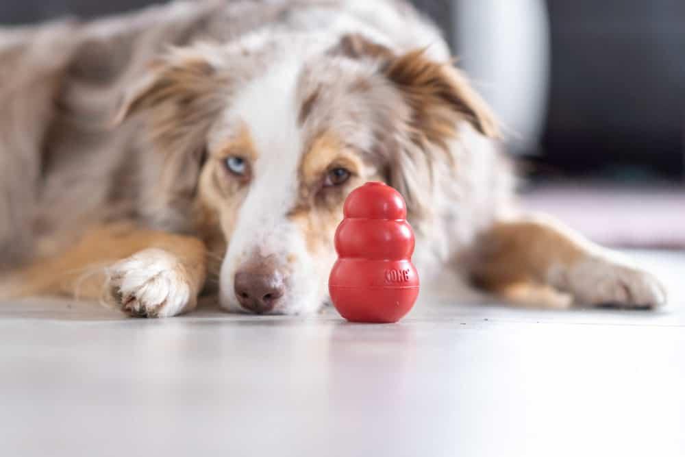 Hund mit KONG