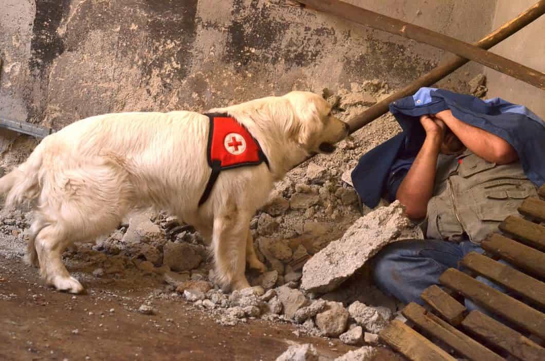 Rettungshund im Einsatz