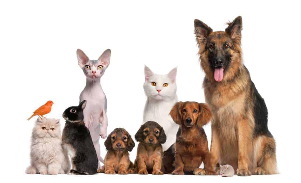 Hunde, Katzen und Vögel auf einem Bild