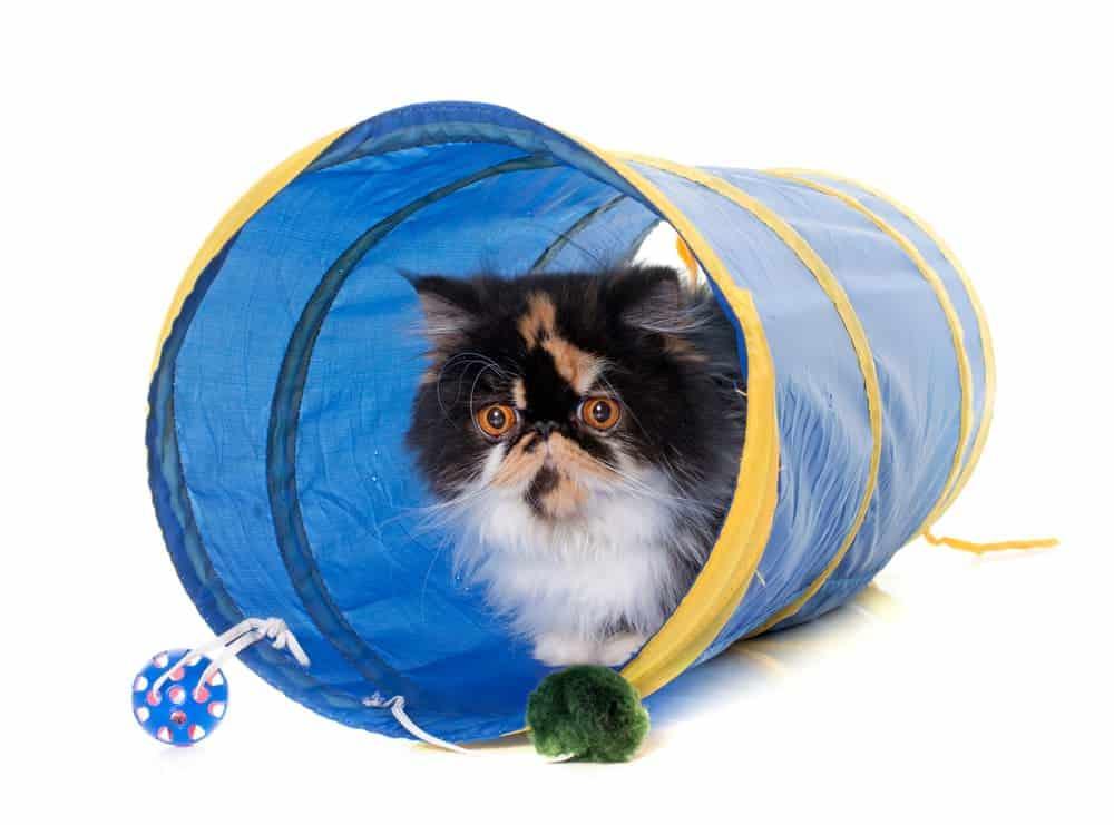 Katze in Spielzeugtunnel