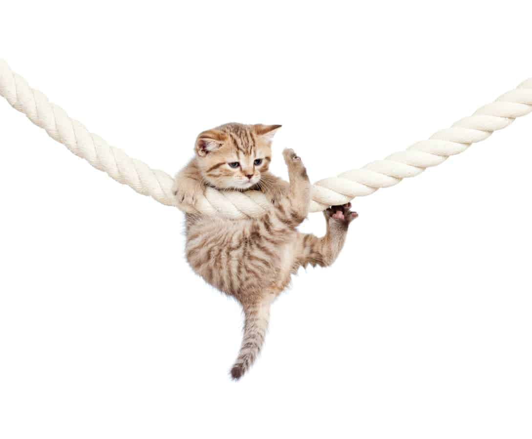 Katze klettert an Seil