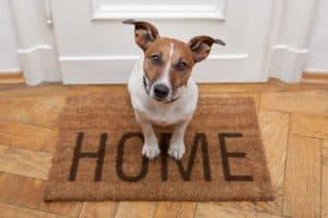 Hund alleine lassen