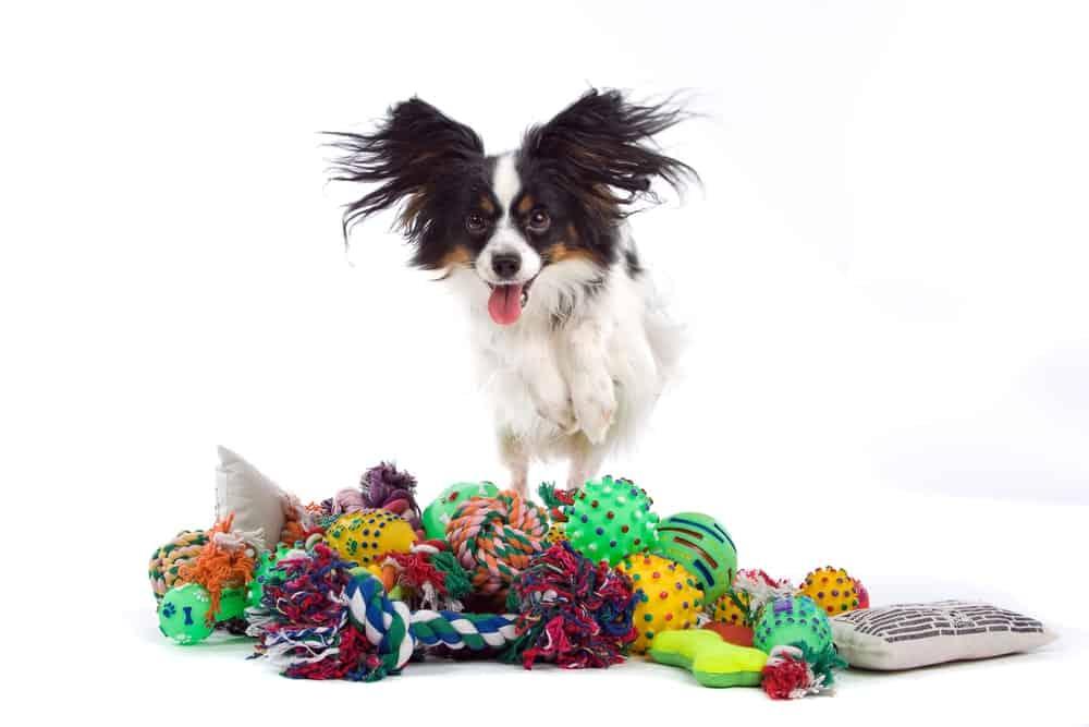 Spielzeuge für Hunde selber machen