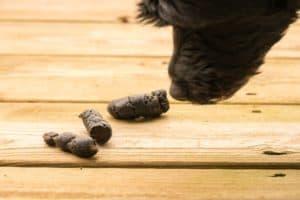Hund frisst Kot