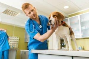 Berufe mit Hunden