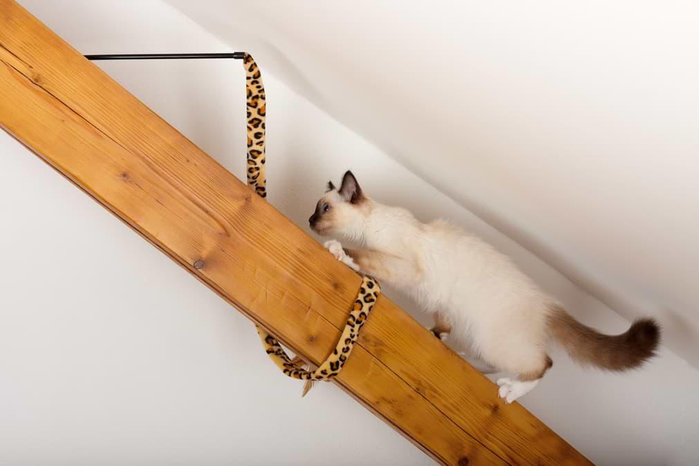 Katze klettert in Wohnung
