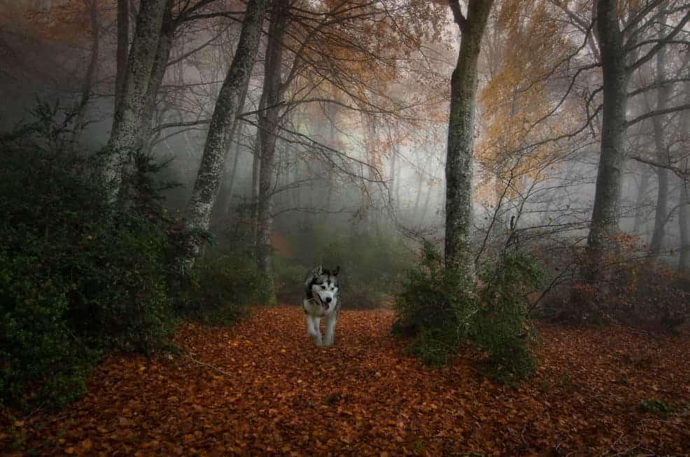 Hund im Dunkeln