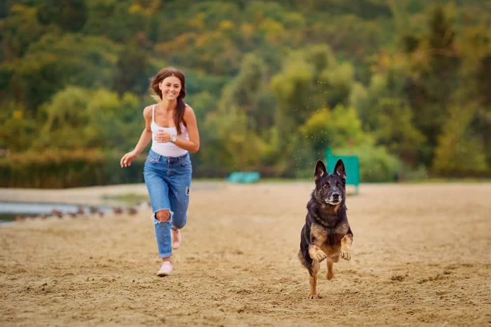 Teufelskralle bei alten Hunden