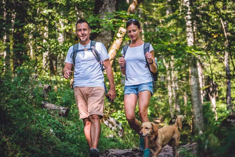 Urlaub mit Hund in Deutschland: Wandern im Erzgebirge