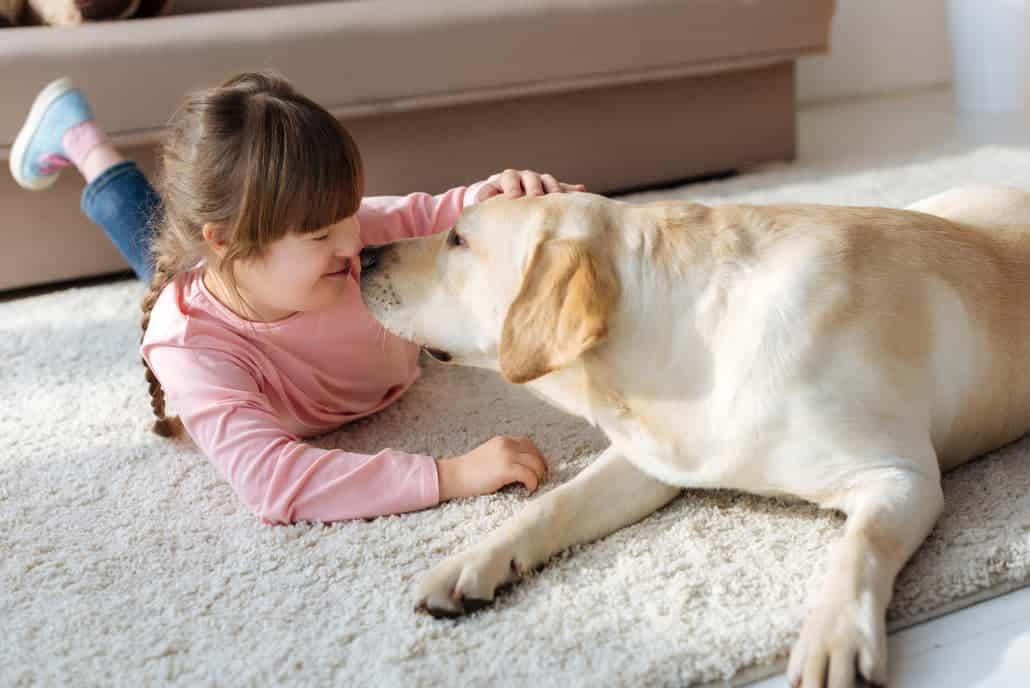 Labrador mit Kind
