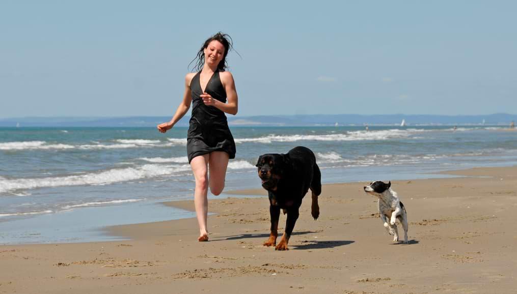 Gebustagsgeschenke für Hunde