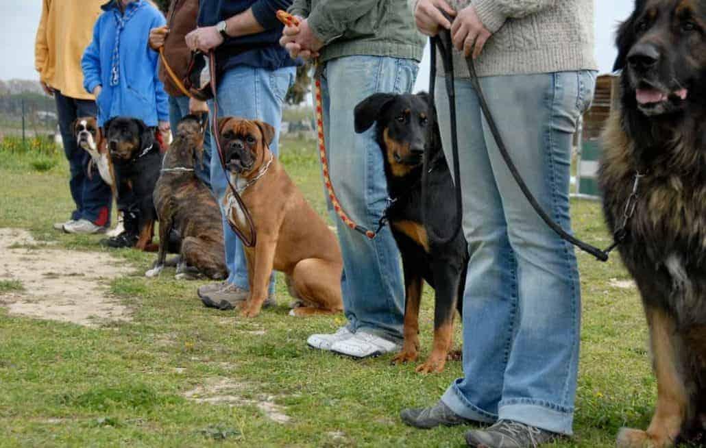 Crossdogging ist für jeden was