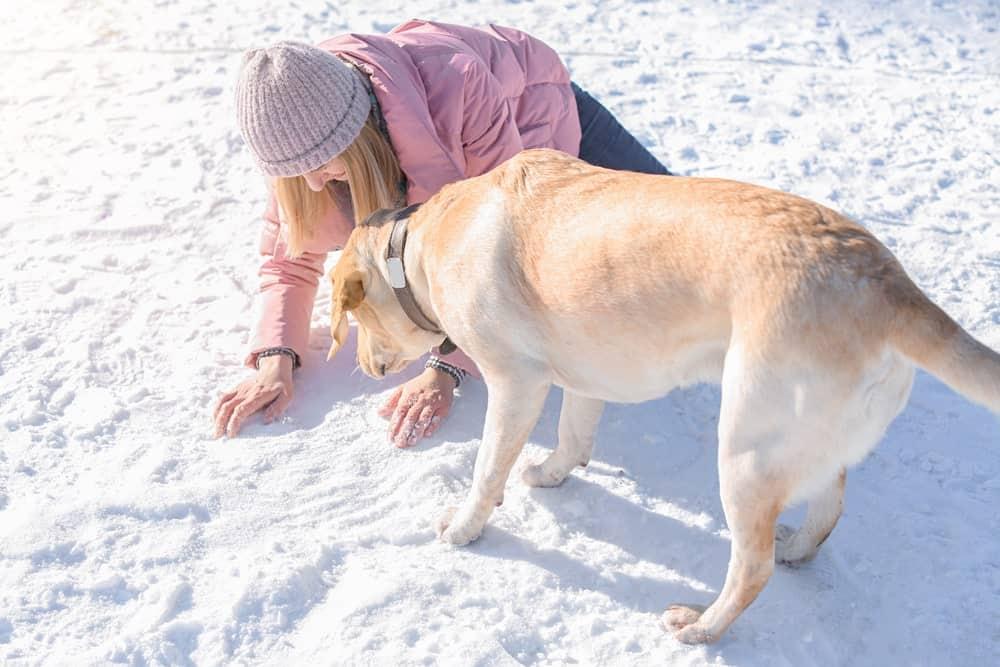 Pfotenbalsam für Hunde