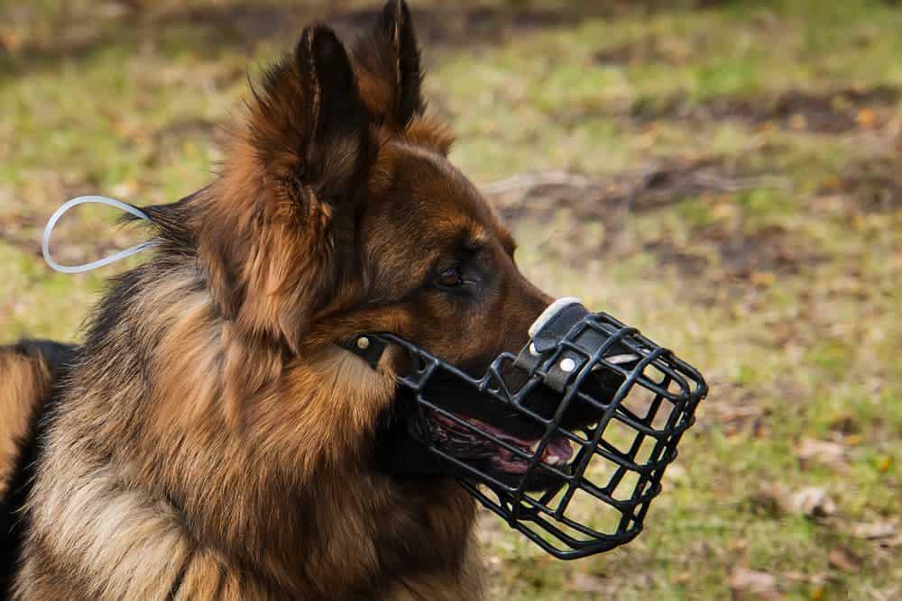 Hund mit Maulkorb - Übersprungshandlungen vermeiden