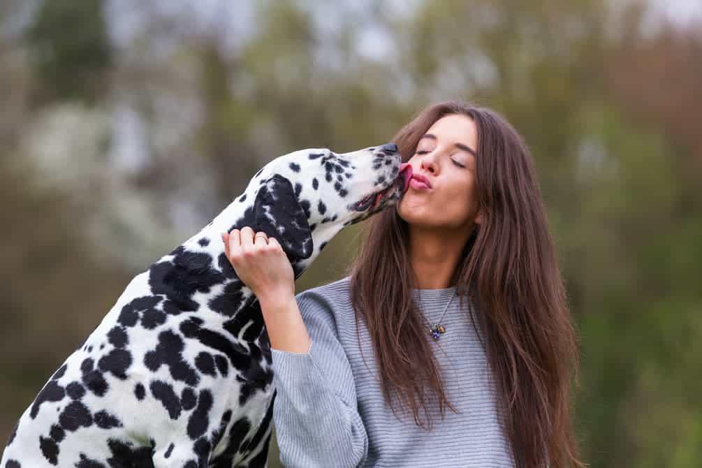 Dalmatiner und Frau