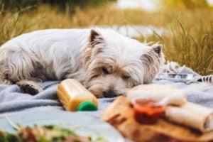 Hunde-Smoothies