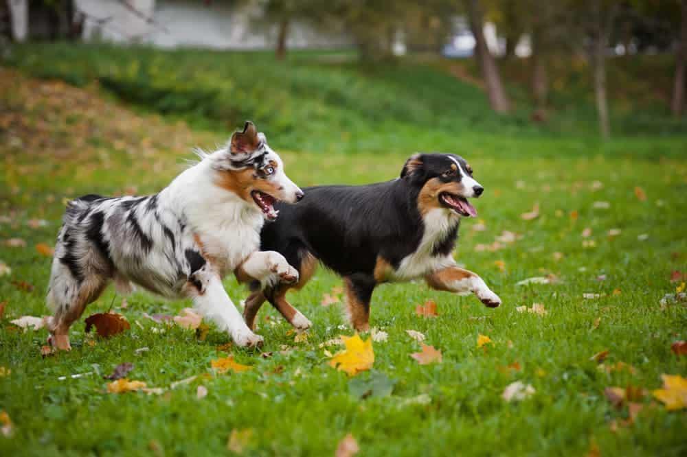 Zwei Hunde toben