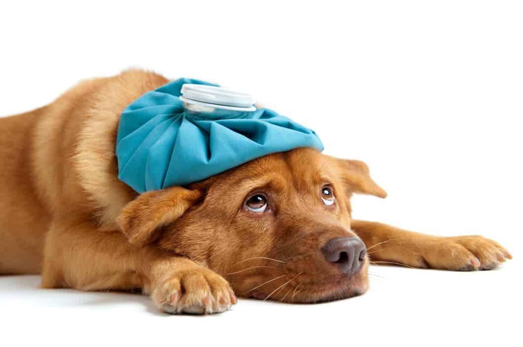 Hund ist krank
