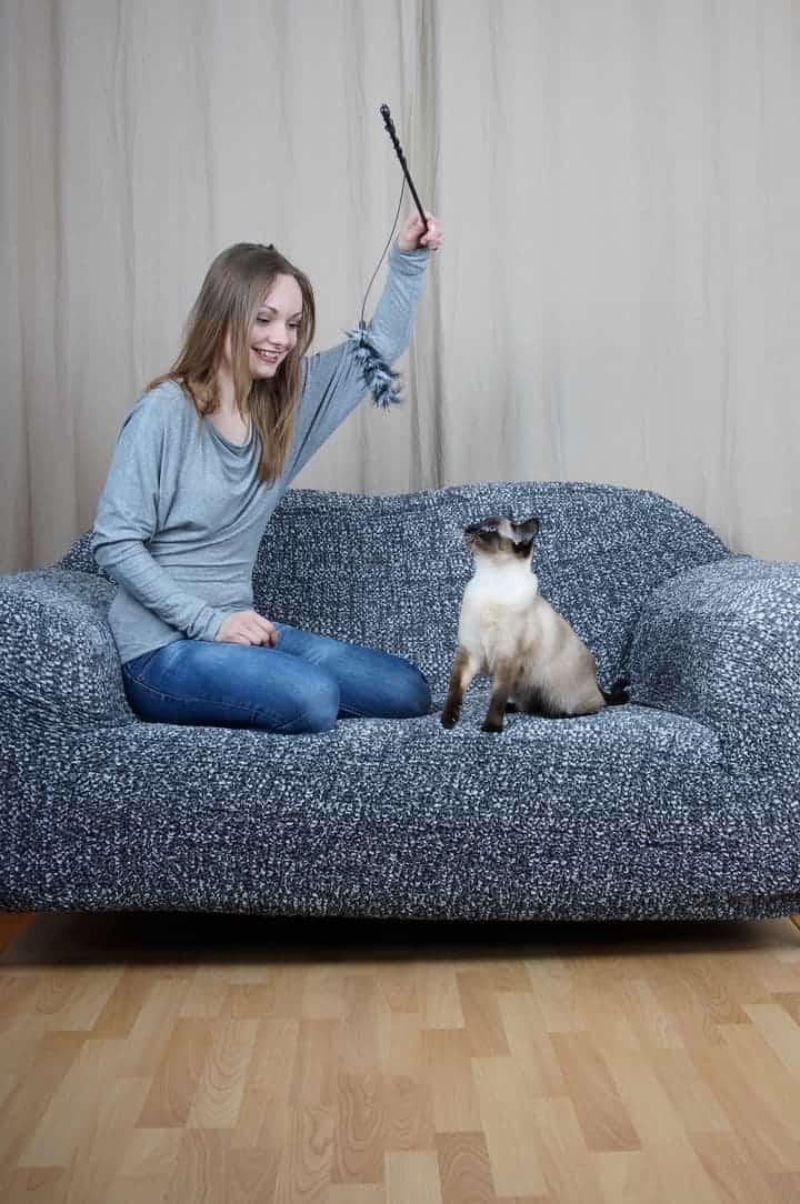 Beschäftigung für Katzen mit einer Reizangel