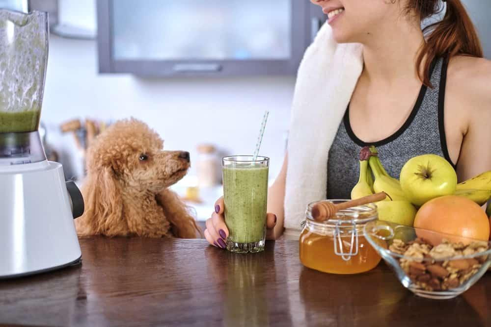 Gesunde Hunde-Smoothies