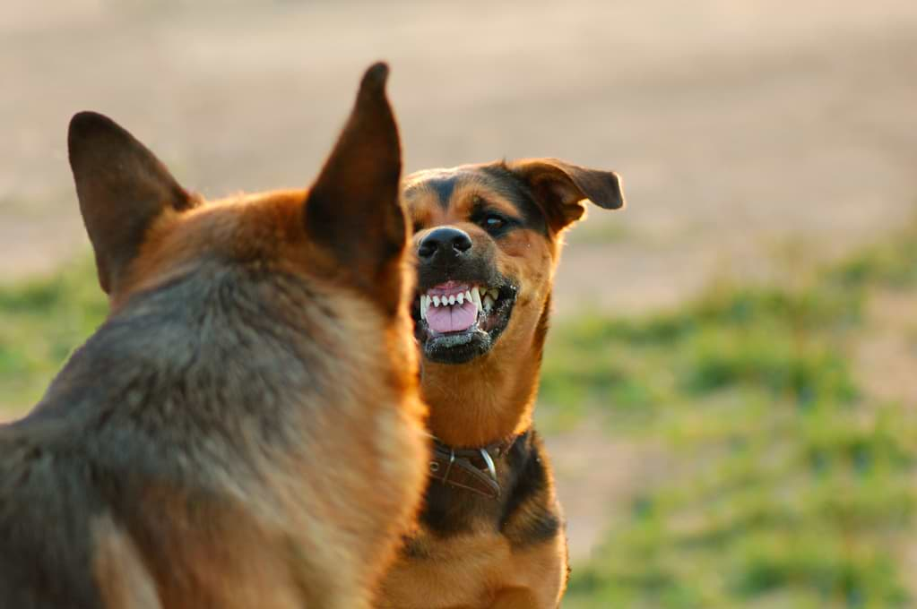 Hunde sind aggressiv
