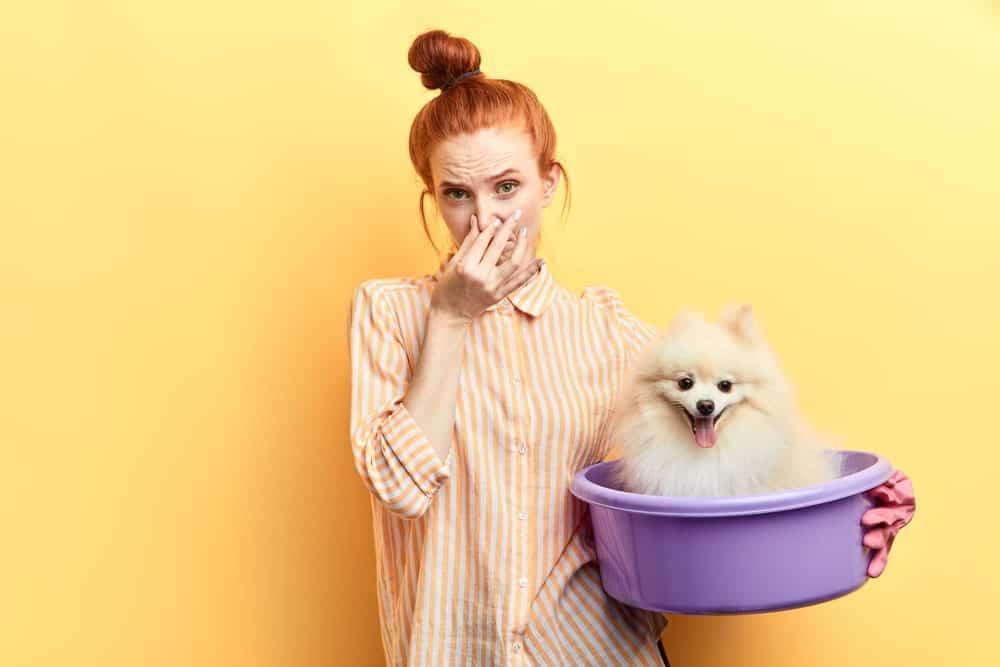 Blähungen beim Hund - Frau hält sich Nase zu.