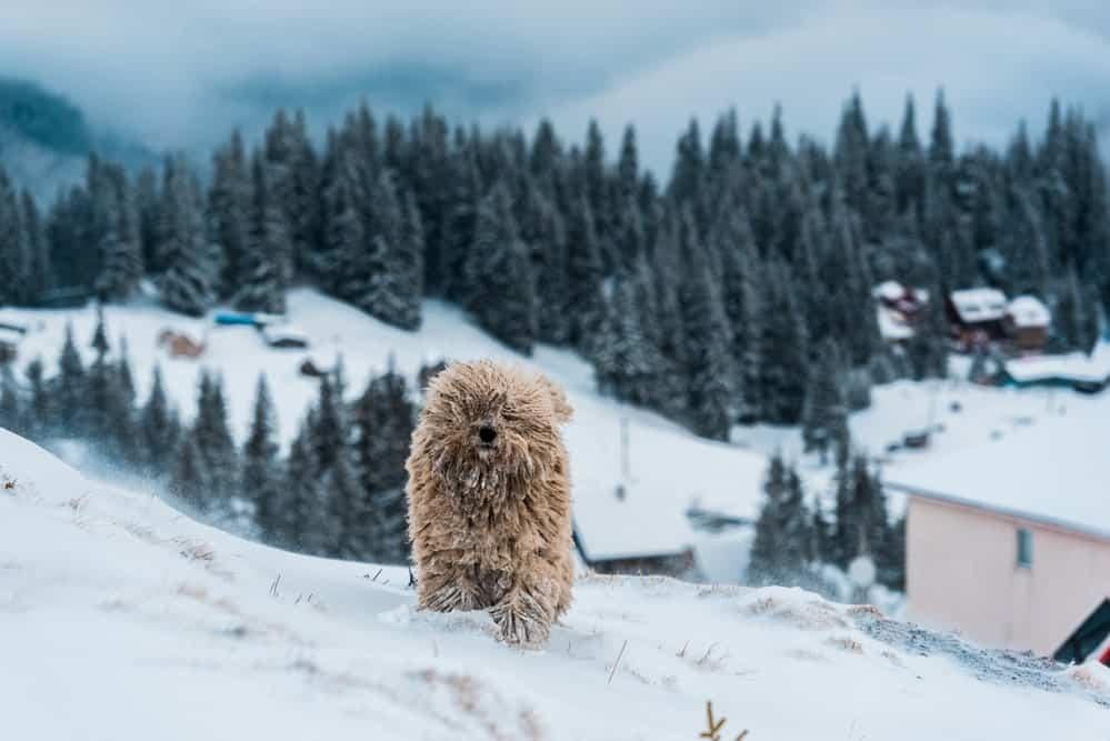 Urlaub mit Hund in Deutschland: Schwarzwald