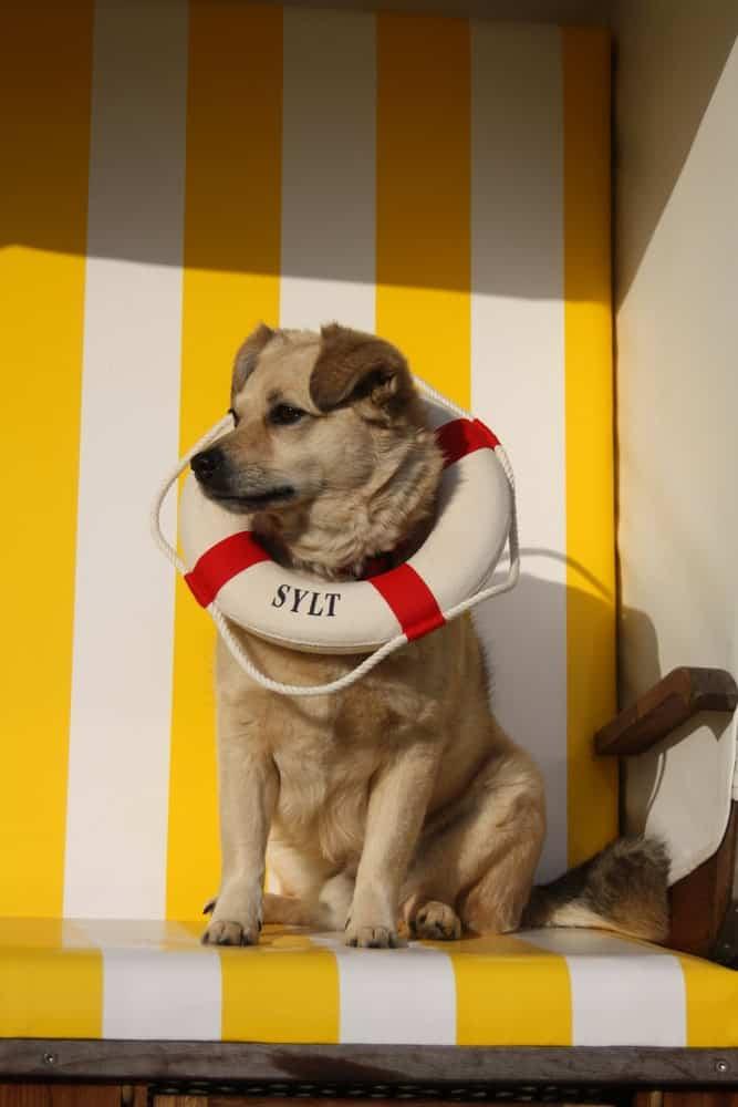 Urlaub mit Hund in Deutschland auf Sylt