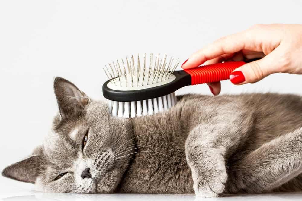 Katze lässt sich bürsten