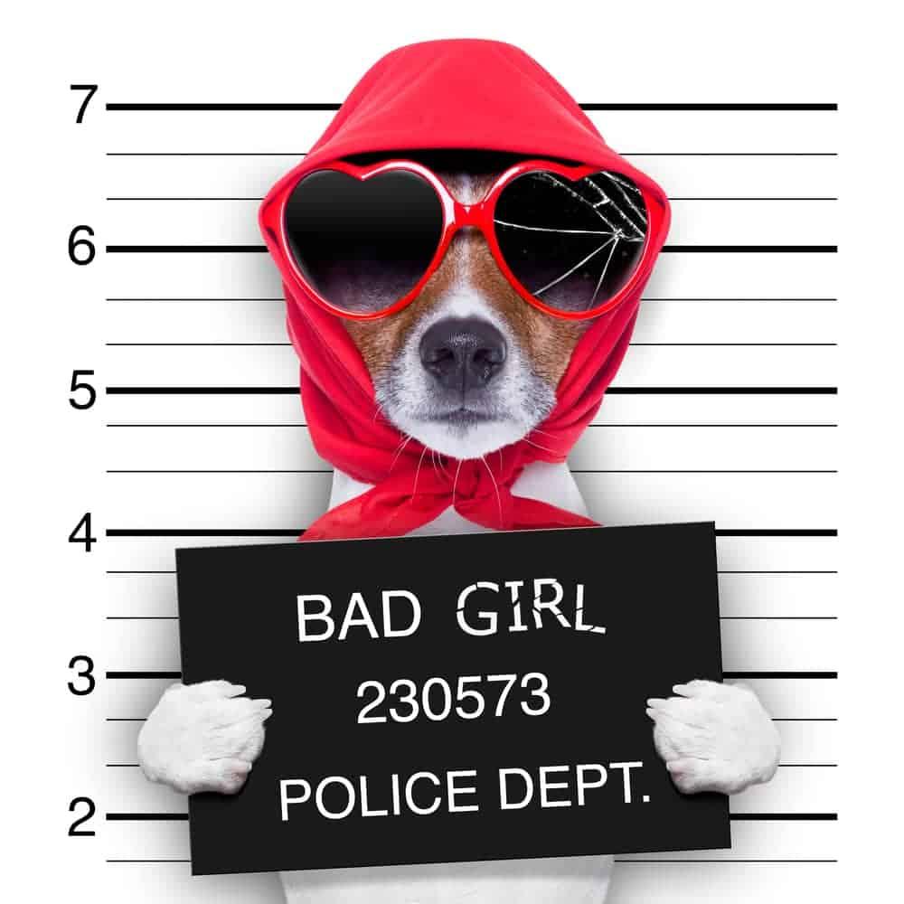 Böser Hund