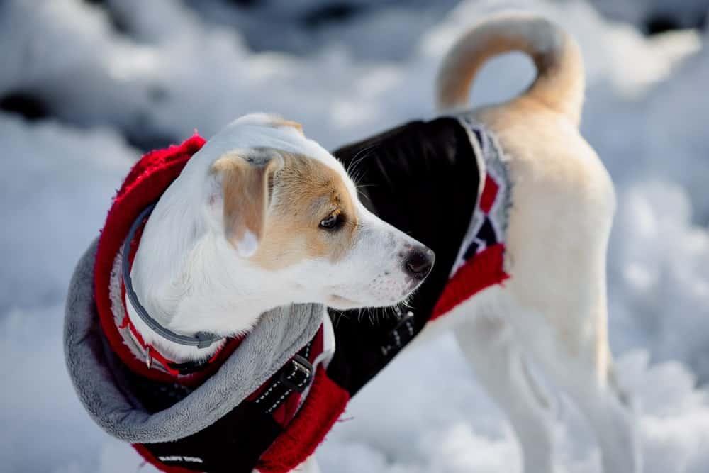 Immunsystem beim Hund stärken - Mantel anziehen