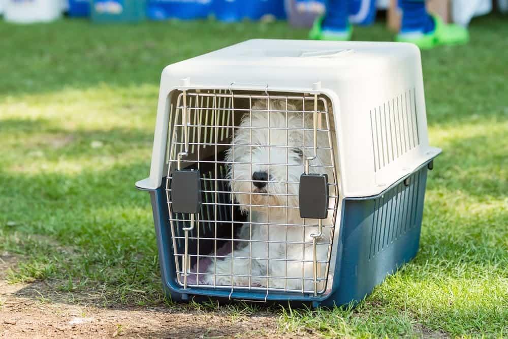 Hundebox oder Hundetrolley