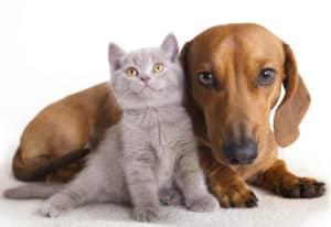Ernährungsberater für Hunde und Katzen