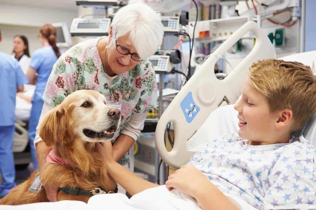 Therapiehund im Krankenhaus