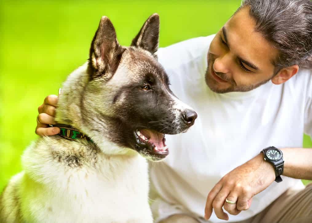Hund streichelt Akita
