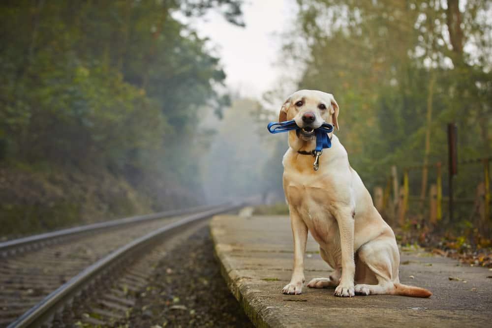 Hund das Bellen abgewöhnen durch eine Aufgabe