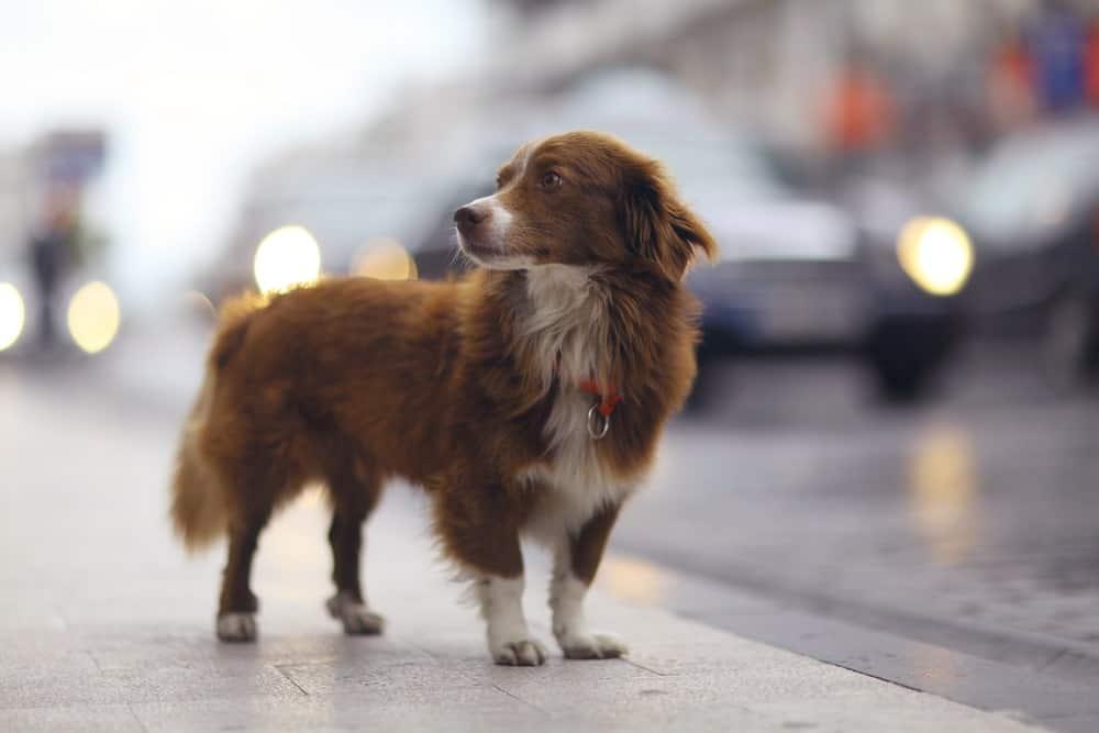 Sodbrennen beim Hund: Auslöser ist oft Stress